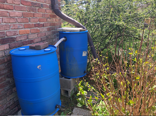 DIY homemade sustainability project rain barrels at gutter downspouts